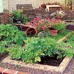 Все нюансы выращивания фасоли