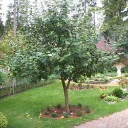 Огурцы: выращивание в теплице