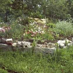 Каким способом выращивать зеленый лук?