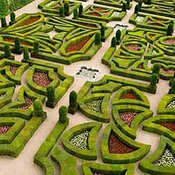 Хвойные растения в ландшафтном дизайне: нужно ли?