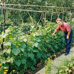Аспекты овощеводства по Митлайдеру