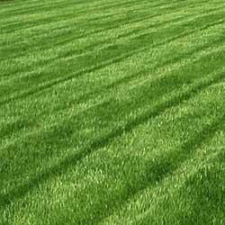 Ландшафтное озеленение: клумбы и газоны