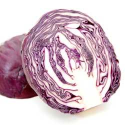 Технология выращивания красно- и белокочанной капусты