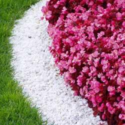 «Секретная» технология посева газонов