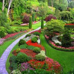 Как вырастить газон?