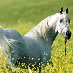 Все о породах и мастях лошадей