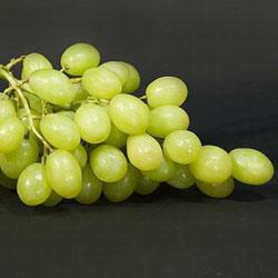 Как подвязывать виноград?