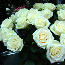 Как ухаживать за розой Кордана
