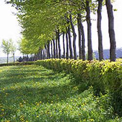 Как сделать живую изгородь на даче?