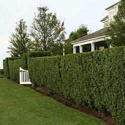 Декоративные кустарники для сада: выбор и посадка