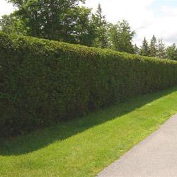 Декоративные хвойные кустарники и растения – важный элемент декора
