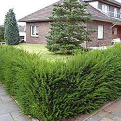 Декоративные растения: деревья, кустарники и трава