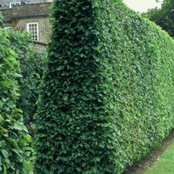 Все о вертикальном озеленении