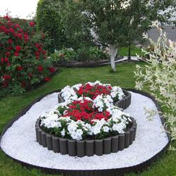 Выбираем однолетние цветы для клумб