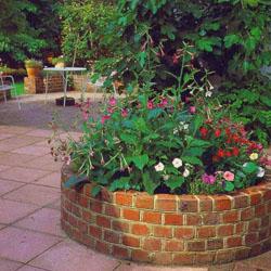 Выбираем неприхотливые и низкорослые цветы для клумб