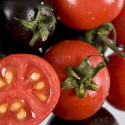 Выращивание высокорослых помидоров с помощью агротехники
