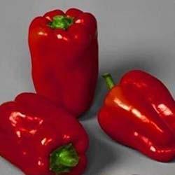 Горький перец: выращивание и уход