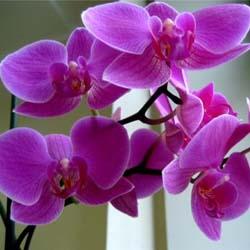 Орхидея уход в домашних